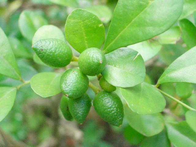 背景 壁纸 绿色 绿叶 树叶 植物 桌面 640_480