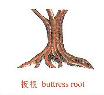 花台上的树长大了怎办?